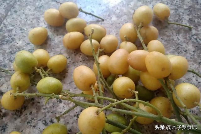 黄皮果是什么水果?几月份可以吃
