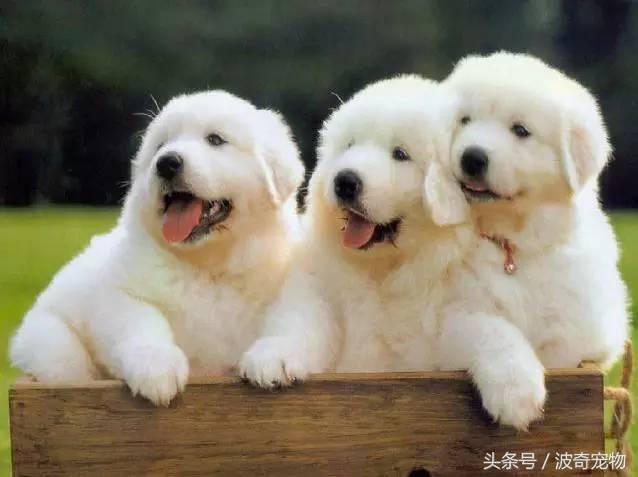 中国一共有多少种狗(狗狗品种介绍大全插图(3)