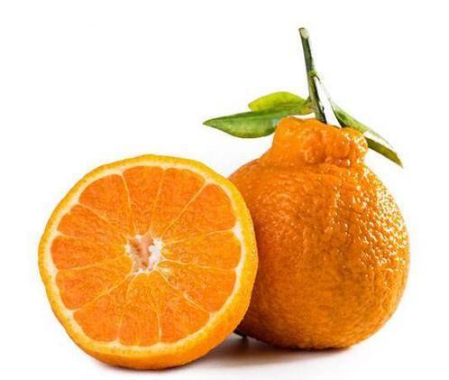 丑橘吃多了会怎样(丑橘真的吃了不上火吗)插图(1)