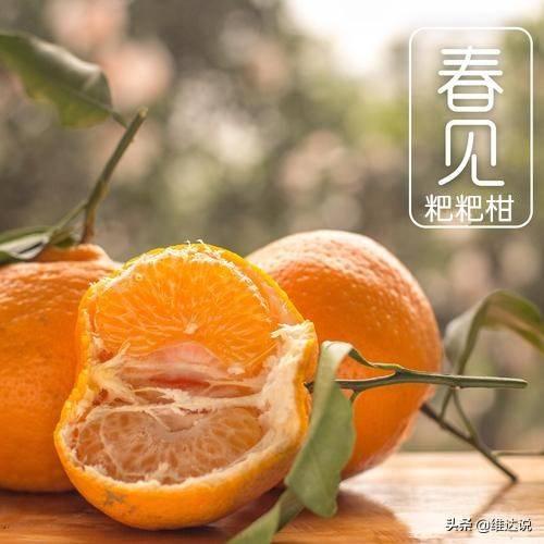 丑橘的功效与作用禁忌(丑橘好吃吗)插图(1)