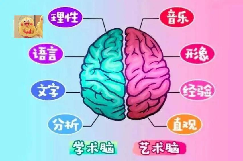 右脑发达孩子的表现