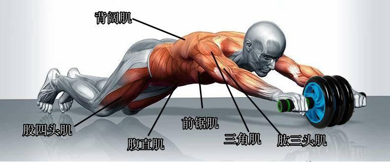 健腹轮能减肚子赘肉吗(健腹轮你真的做对了吗)插图(4)