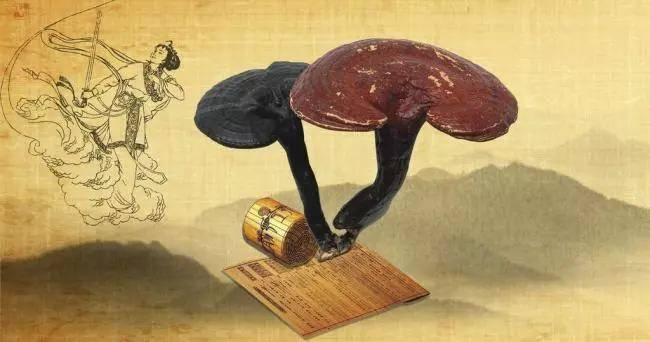 2021上海燕窝滋补品展资讯-买了灵芝不懂吃?灵芝有7种吃法