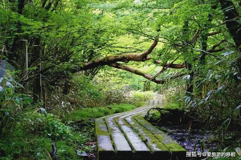 制霸朋友圈的日本三大秘境之一祖谷,桃源乡般的小众旅行目的地