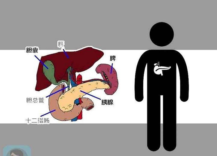 暴饮暴食小心胰腺炎找上你,日常生活要注意什么?