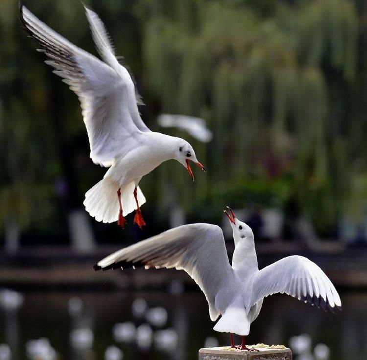 云南迁徙红嘴鸥,云龙太极图,腾冲秋色你一定要来看看