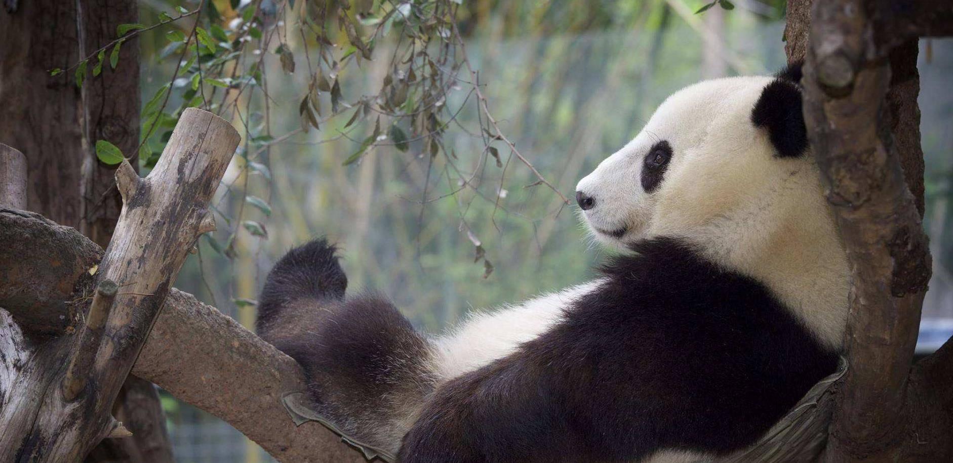 中国所有国宝动物图片