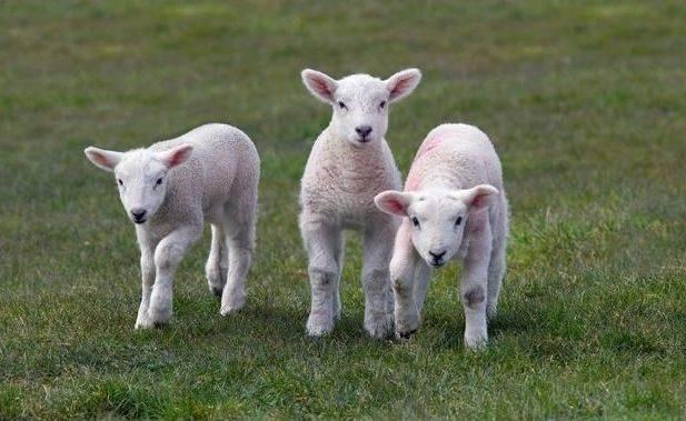 """3月,明天,大金羊赶紧来接""""头""""喜!"""
