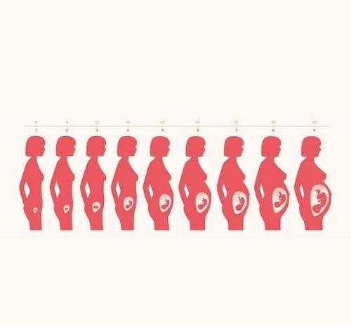恭喜陈法拉生女儿啦,十月怀胎不容易,生命形成并非一朝一夕  第4张