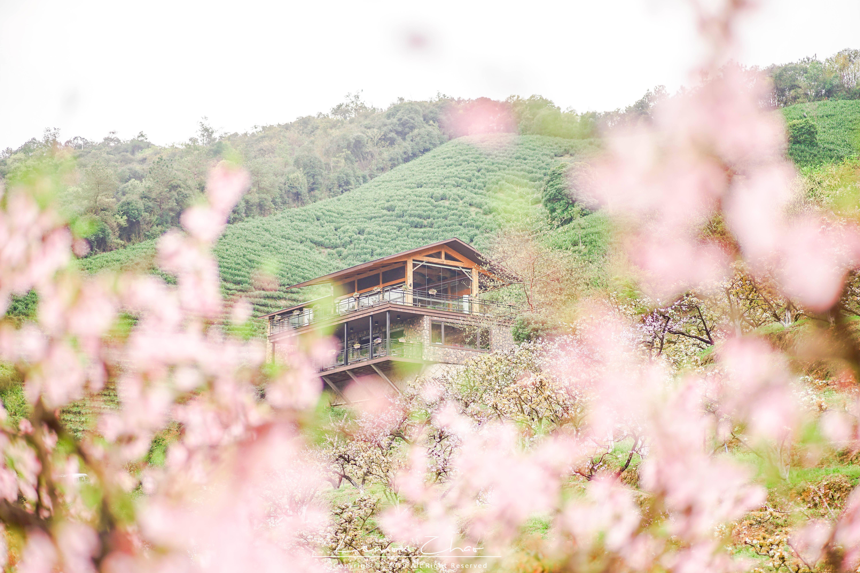 江浙沪最适合自驾的地方,春游踏青好去处,莫干山的春天绝了