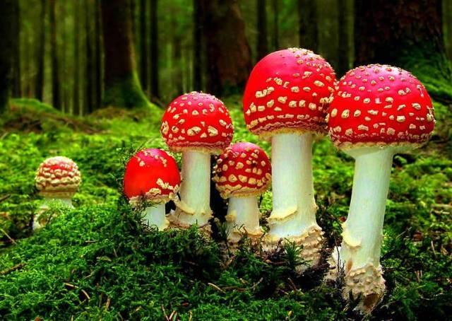 世界最早陆生真菌类化石在我国贵州发现,是蘑菇、酵母的祖先  第2张