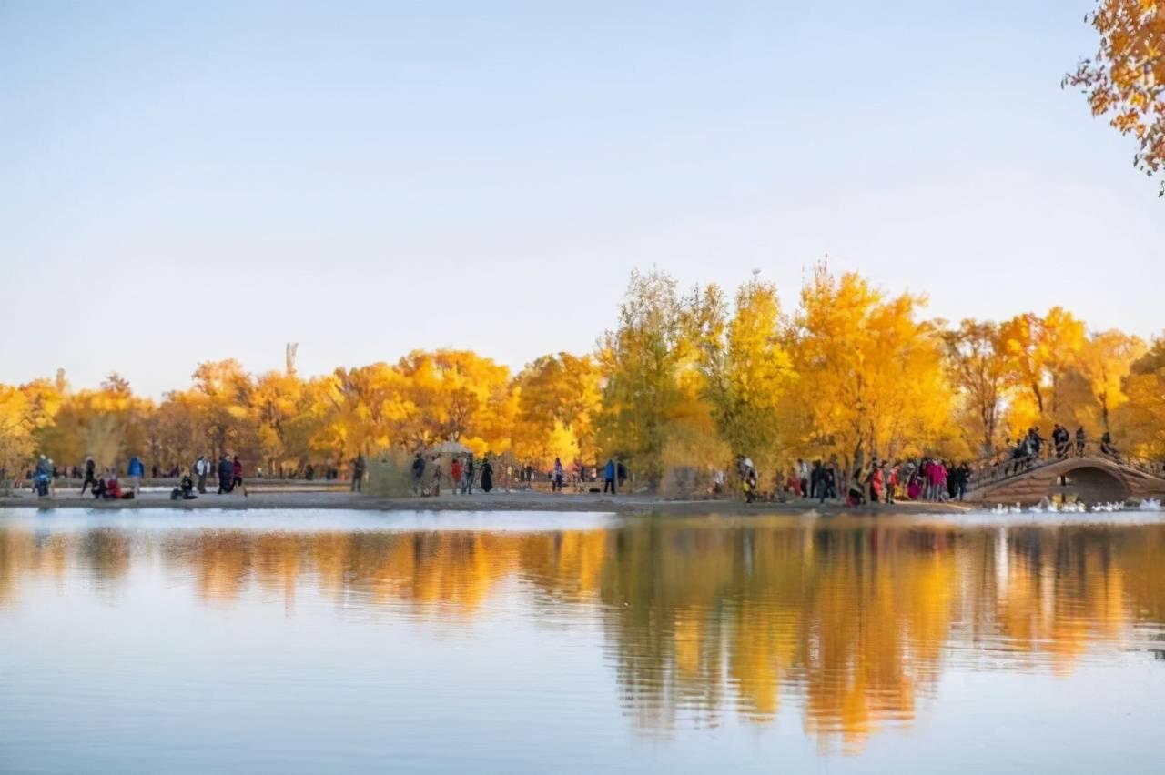 西北此景区每年美一个月,金色的世界如仙境,收藏以后去!