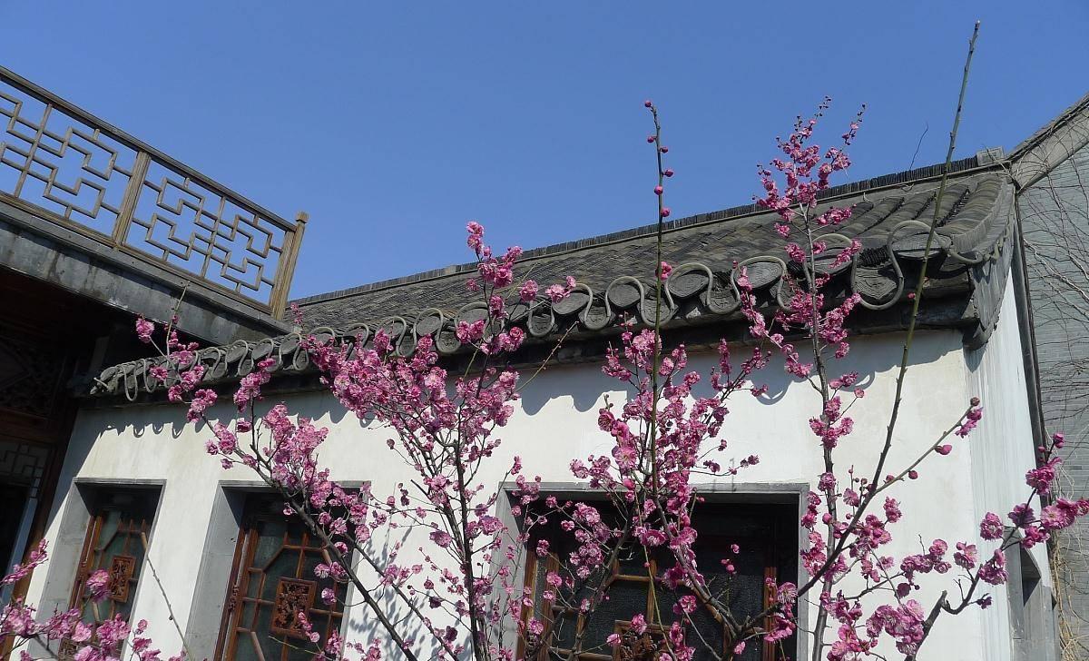 """江苏一座""""别致""""的园林,是扬州人的骄傲,游客:景色雅致"""