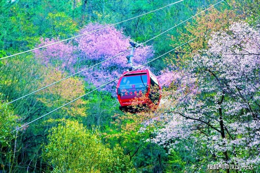 缆车在花丛中穿行 山谷中鲜花盛开 满目春色美不胜收