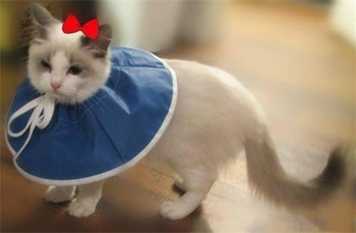 猫咪肾衰竭是猫粮引起的吗