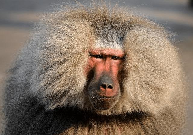 属猴人的后半生,尤其是56年,68年的请注意,这都是命运的安排!