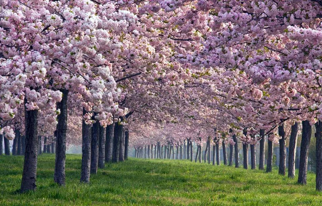 天悦官网平台苦等一年了,出境游或迎来春天?