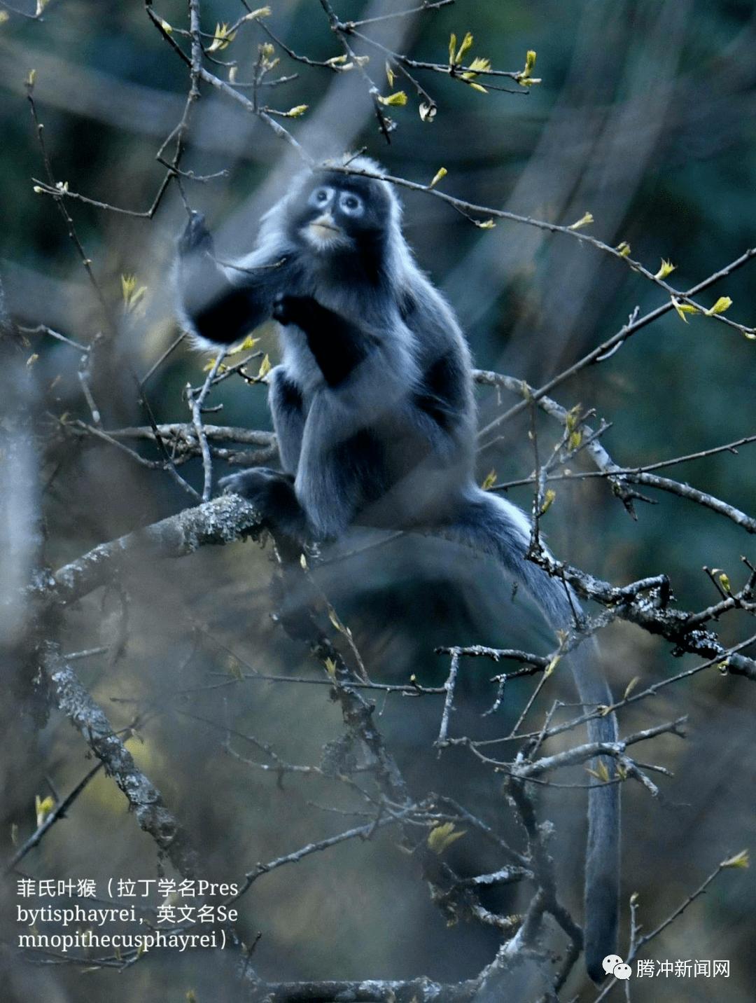 巍巍高黎贡:传奇的世界物种基因库,谱写生命的长歌