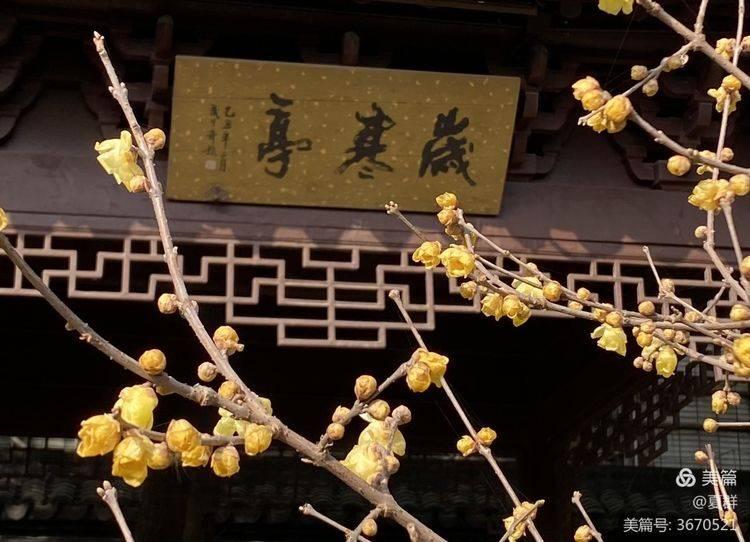 """原创             参观""""金陵第一园""""瞻园,被称为江南四大名园之一,欣赏满园腊梅"""