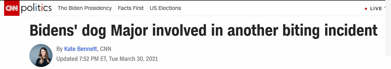 """拜登爱犬刚回白宫又咬人了,此前因""""攻击性行为""""被送回老家"""