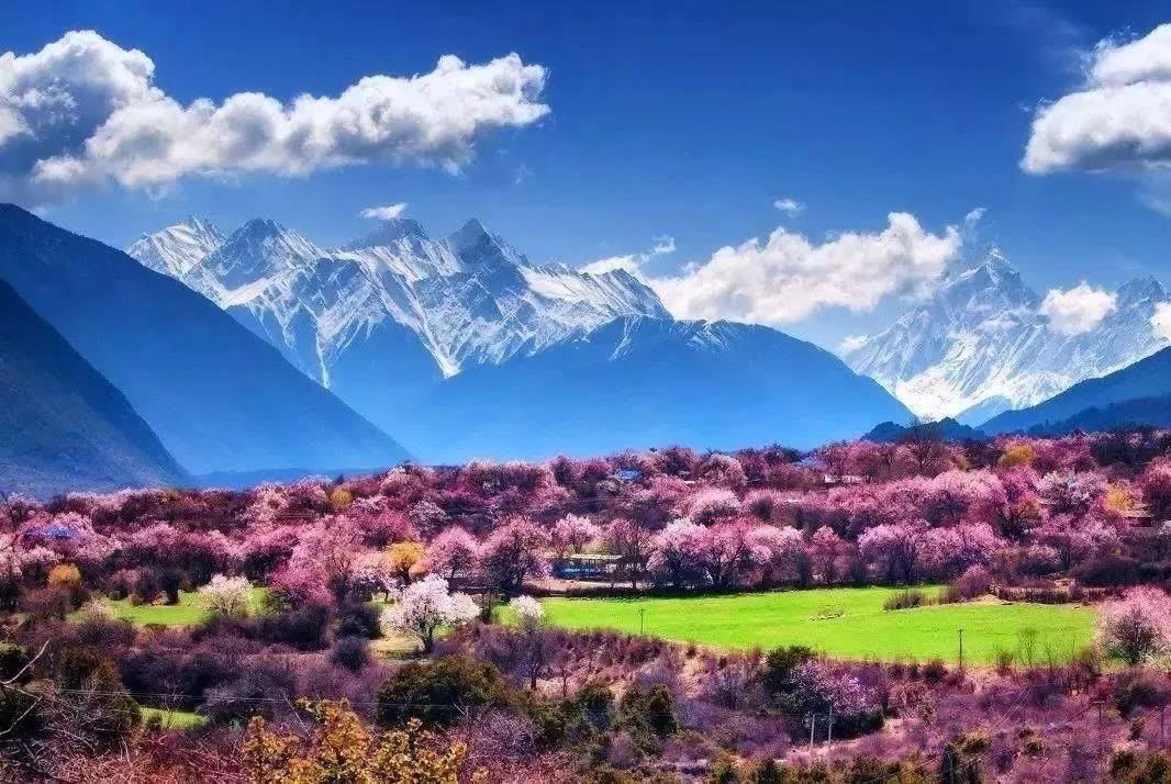 国内哪些地方适合3月旅行?这五个地方不可错过,都是春游好去处