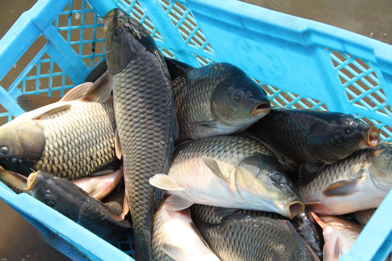 今日干货|要想钓的多,必须先打窝  钓鱼需不需要打窝