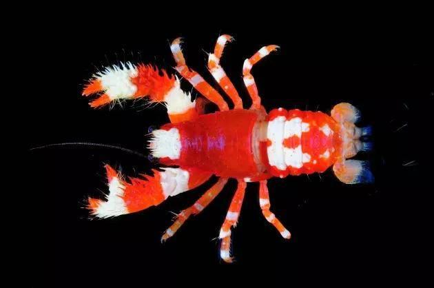 如果题目没有字数限制,这种生物很愿意介绍它长长的头衔  第8张