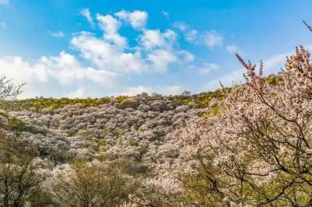 12个一到春天,就治愈人心的陕西美景,四月挑一个去走走吧!