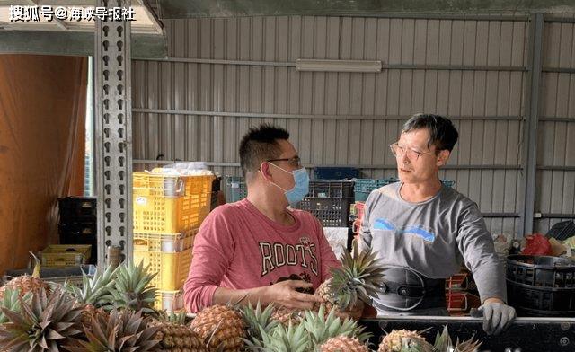 """民进党""""大内宣""""无效!台湾凤梨价格崩盘一个月内濒临腰斩"""
