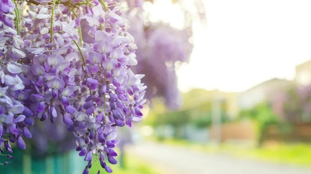 人间四月芳菲始,不负春光不负卿   安永为复旦、上财学子提供高质量实践课程