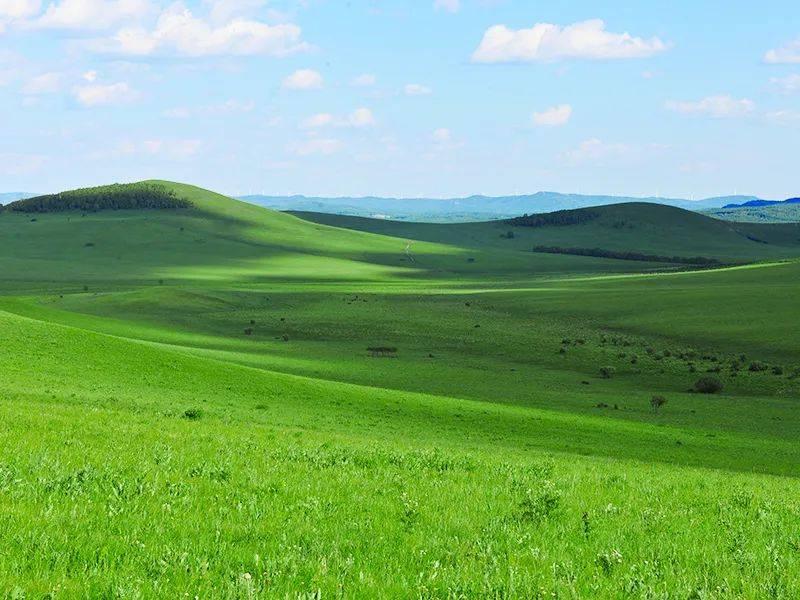 这个夏天,一定要去趟坝上草原!