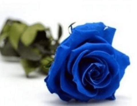 心理测试:四朵玫瑰花,哪朵最妖媚?秒测谁会对你不离不弃?  第3张