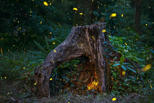 金龟子 蜻蜓·夏虫情趣,记忆中的美丽夏天
