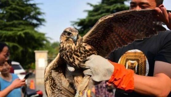"""男子捡到一3斤重""""怪鸟"""",翅膀张开80厘米,专家:幸好没有放生"""