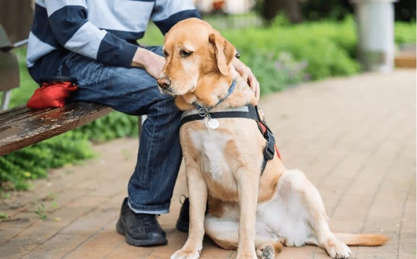 狗界最溫順的3種狗和最兇猛的3種狗,你養了哪種?