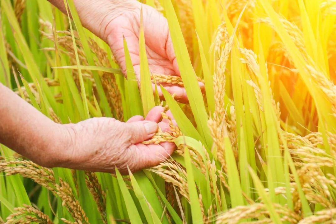 数字农业的发展趋势与推进途径