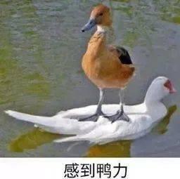"""知乎高赞:""""读研""""=""""啃老""""?"""