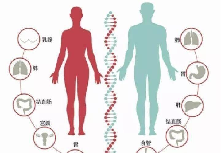 雄性交配和排尿器官二合一,雌性却分开,差异为何如此巨大?