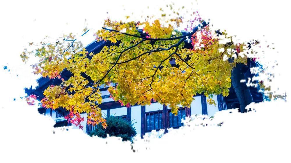 秋季的风,安静中带着温柔……