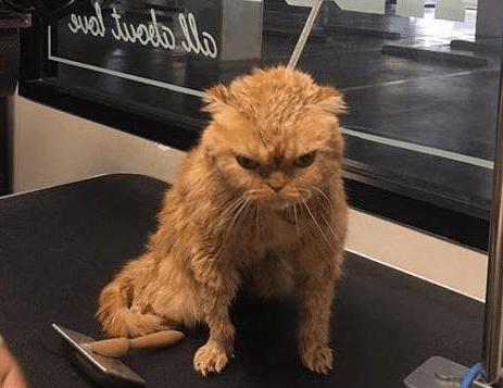 主人带着猫猫去洗澡,洗完澡出来,看到猫猫的眼神我笑了mpq