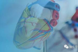 心通醫療通過聆訊:7個月虧近2億 專注於心髒瓣膜醫療