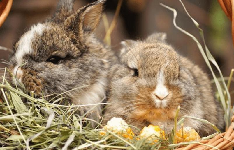 兔子洗耳液哪個牌子好