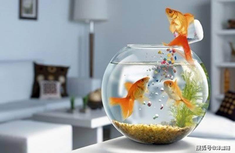 家中鱼缸摆放有哪些习俗讲究?