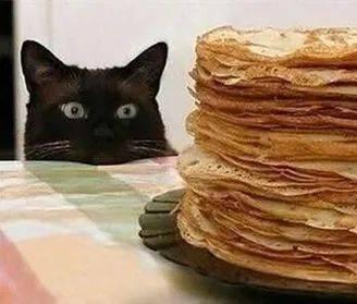 偷内衣栽赃主人,一看就不是什么正经猫!