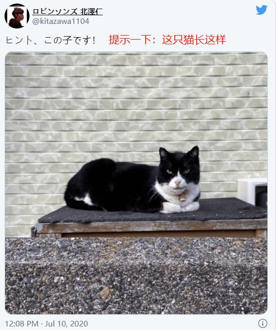 """一张图逼疯14万网友,日本推特""""找喵喵大赛""""有多难"""