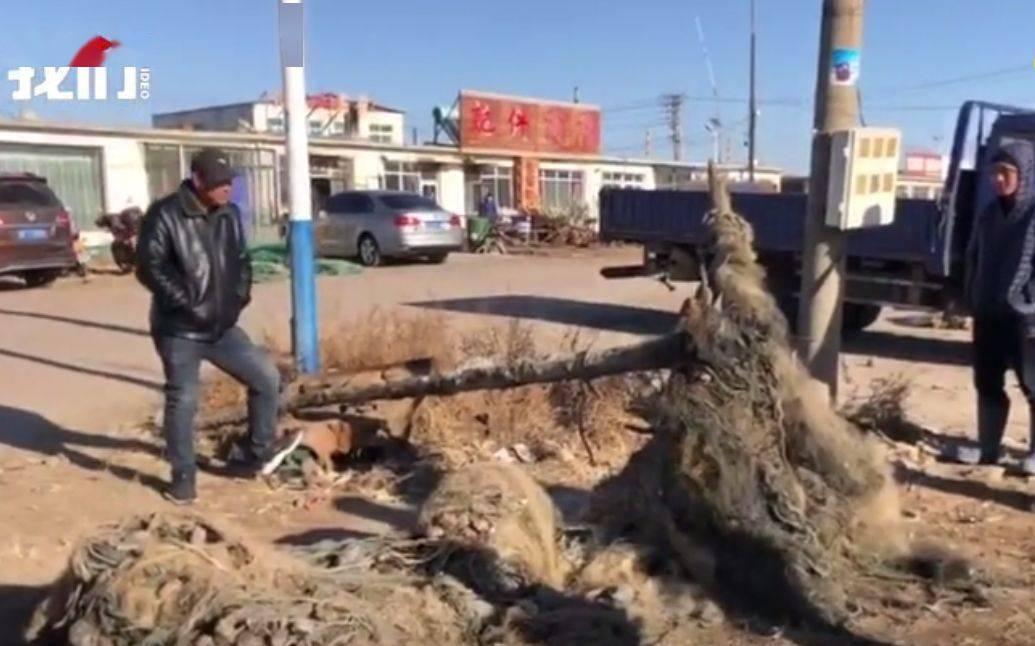 辽宁绥中渔民捞出千余斤大船锚:疑为明代商船使用,距今约六百年