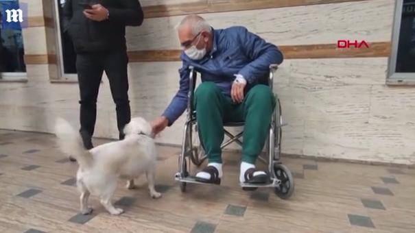 暖心!土耳其老人生病入院 爱犬在院外守候6天