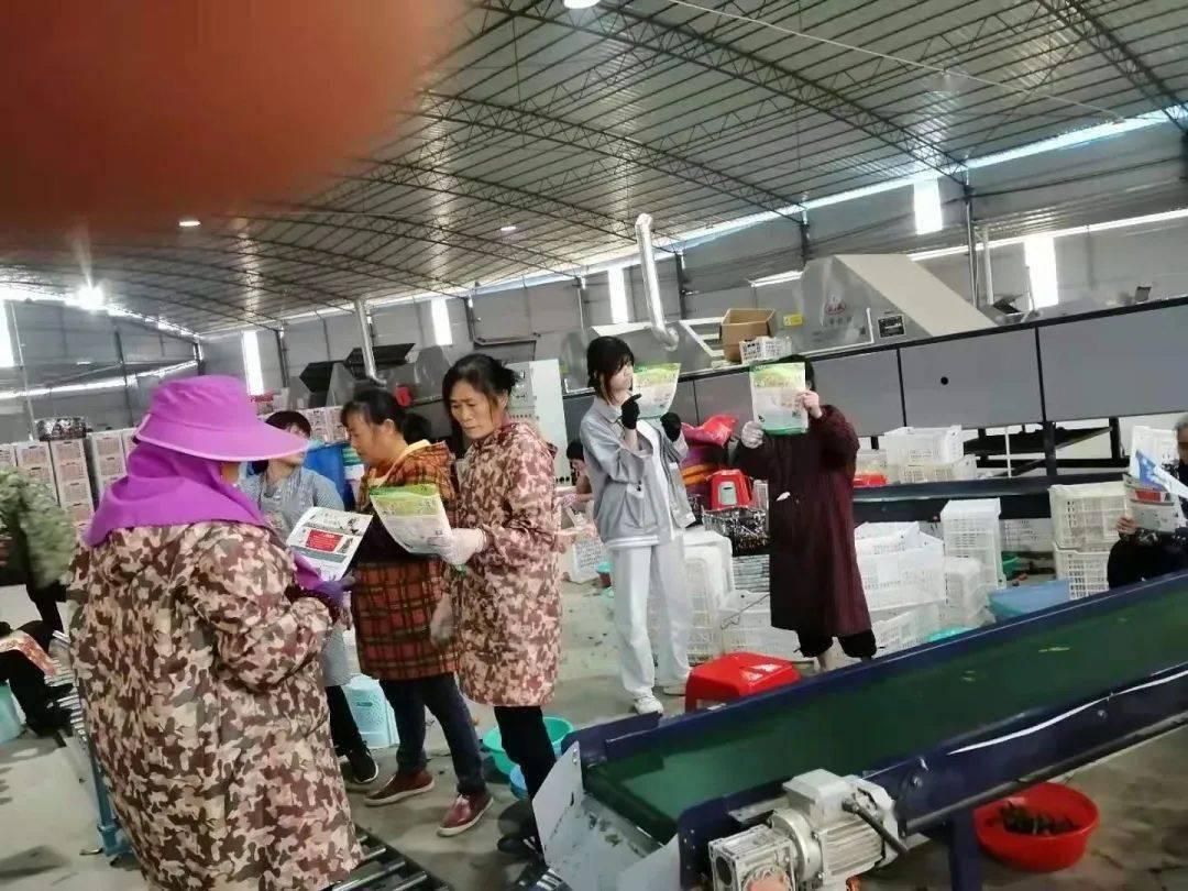 鹿寨县导江乡开展多种形式宣传活动