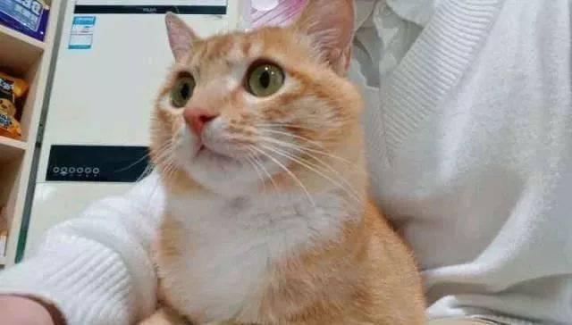 有猫砂猫咪随地大小便图片