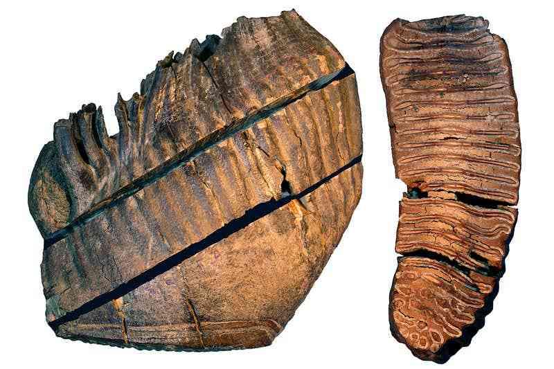 科学家提取出史上最古老DNA 可追溯到165万年前